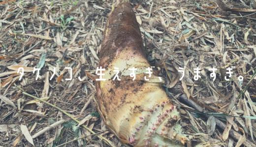 裏山のタケノコを食べまくる。